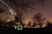 Nachtpfauenauge bei Nacht