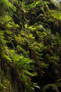 Grüne Wand am Fels