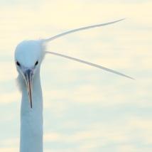 Schmuckfedern im Wind müssen sehr stören...