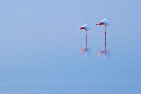 ein Flamingopaar