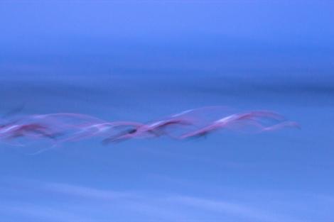 Flamingowischer in der Dämmerung