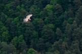 Geier überm Wald
